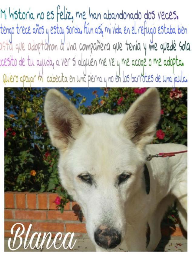 perro 11 de octubre 2016
